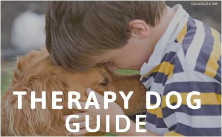 Therapy Dog Guide